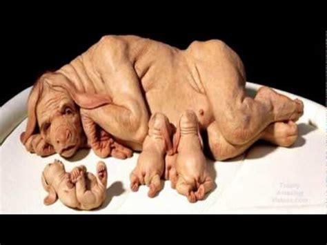 human puppies human hybrid sick