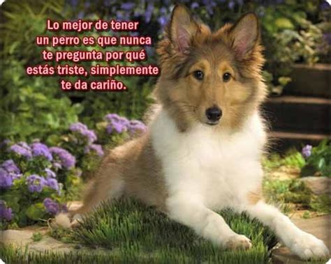 imagenes muy bonitas de animales im 225 genes de perritos tiernos con frases y mensajes bonitos
