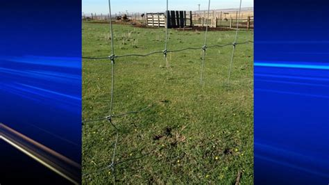 haircut calgary country hills guzoo animals escape enclosures after fences cut ctv