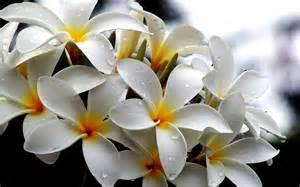 white flowers wallpaper 1920x1200 38285
