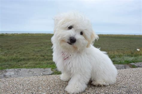 small puppy names adorable small names 100 ideas my s name