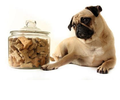 the pet pantry treats