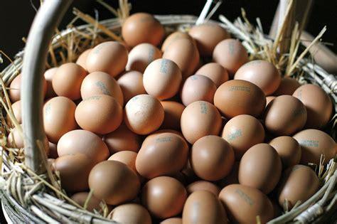 cucinare l uovo i modi insoliti di cucinare le uova notizie dall italia