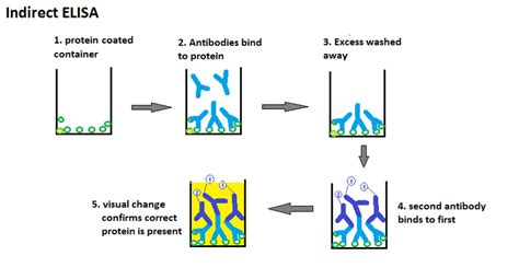test elisa difference between direct and indirect elisa direct vs
