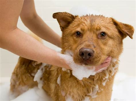 ticks in bathroom 10 ways to stop ticks from biting your dog