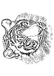 Coloriage Tigre Coloriage Sur Hugolescargot Com Dessin De Coloriage Chat Gratuit Cp Coloriage Mandala Chat Imprimer Coloriage Petits Chats L