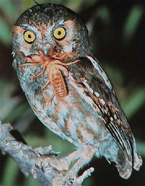 eating habits michael s amazing owls