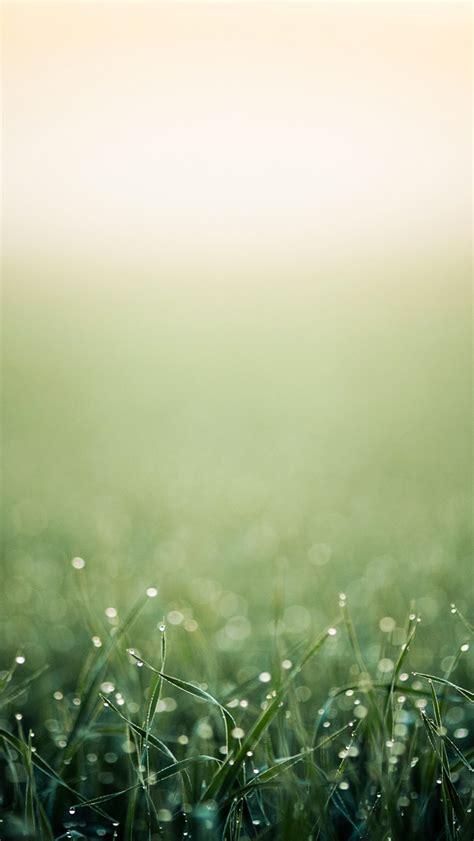 iphone wallpaper green grass moist grass header the iphone wallpapers