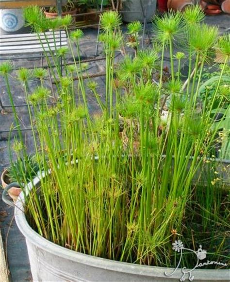 Bien Plantes D Interieur Originales #5: 31846.jpg