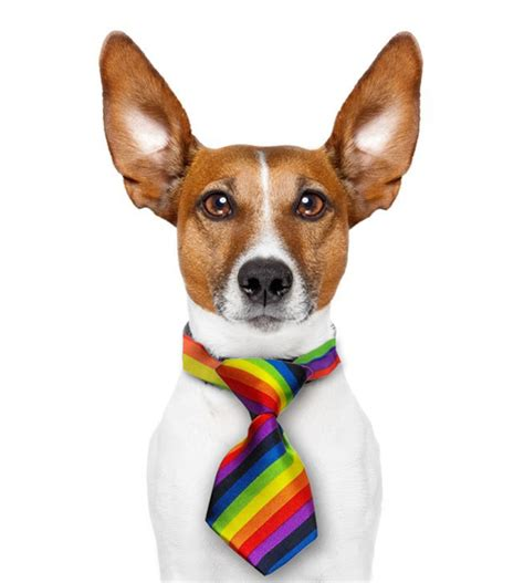 rainbow dogs mini rainbow pet tie dogs cats lgbt and pride pet accessories
