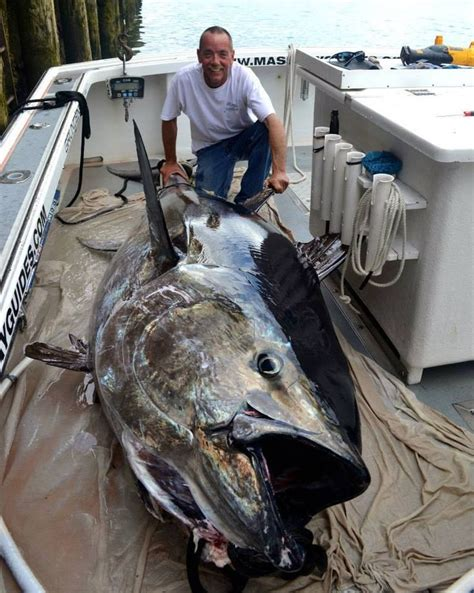 the biggest boat in the whole world is this the biggest blue fin you ve ever seen
