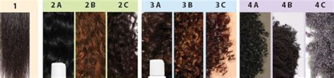 Hair Types Chart Hair by The Speediest And Easiest Techniques To Find Hair Types
