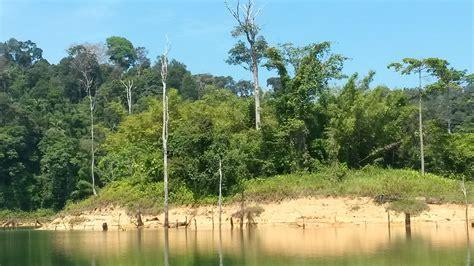 malesia turisti per caso foresta pluviale belum viaggi vacanze e turismo