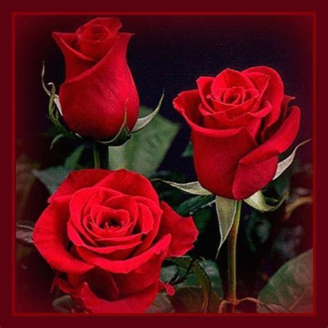 imagenes rosas rojas gratis fotos de rosas rojas animadas con movimiento imagen de