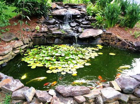 best 25 goldfish pond ideas on pinterest water pond fish pond gardens and outdoor fish ponds