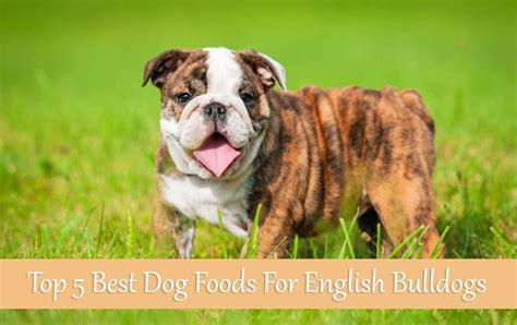 for my awesome bulldogs infinity top 5 best foods for bulldogs buyer s guide 2017