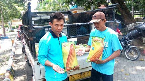 Bibit Jagung Pioneer 21 terima bantuan bibit jagung busuk petani minta ganti rugi