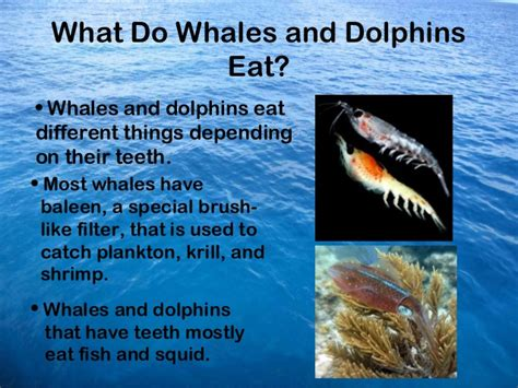 dolphins and whales powerpoint