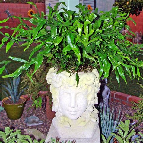 medusa planter my medusa head planter head planters pinterest