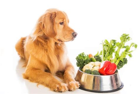 how many does a puppy need how to choose nutrition