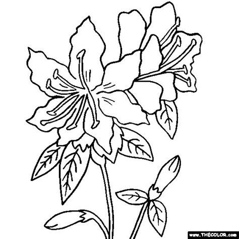 pics for gt pink rhododendron drawing