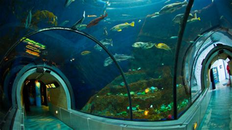 discover the aquarium du québec at a glance aquarium du