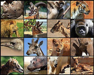 fun mammals quiz  interactive general science quiz