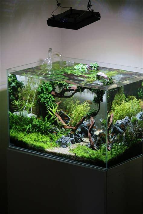 planted tank coisia vallem by lauris karpovs aquascape