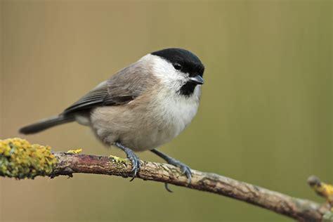 Heimische Vögel Im Winter 4708 heimische v 195 182 gel heimische v gel einebinsenweisheit