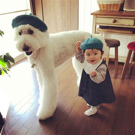 Kostum Rajut Foto Bayi Girraffe gemes banget bayi dan anjing ini sering pakai baju kembar