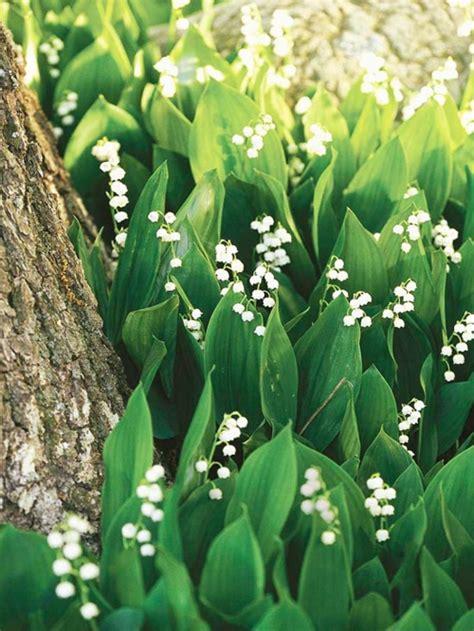Die Schönsten Blumen 4899 by Die Sch 246 Nsten Wei 223 En Blumen F 252 R Ihren Garten