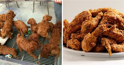 puppies that look like fried chicken 25 things that are hilariously similar to each other bored panda