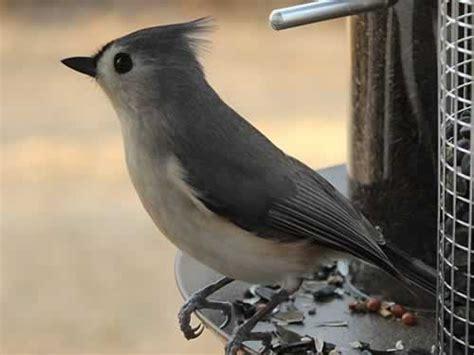 east texas birds birding bird watching