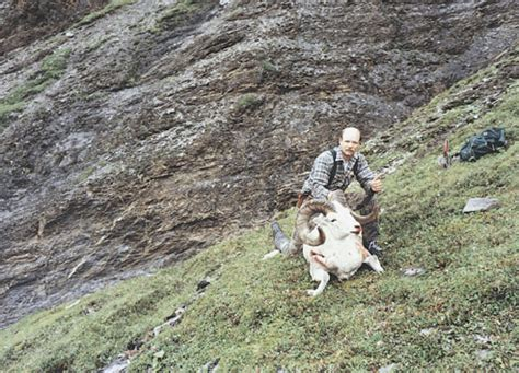dall sheep books dall sheep big records safari club