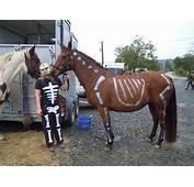 D&233guisement Halloween  1 Forum Cheval