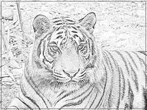 Dessin 195 Colorier Tigre Gratuit