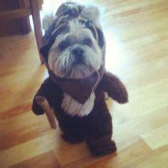 yorkie ewok costume for pet