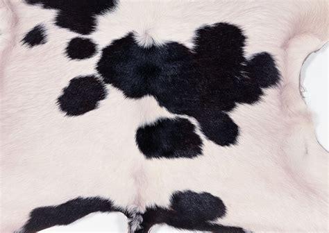 cow fur texture cow fur texture background image