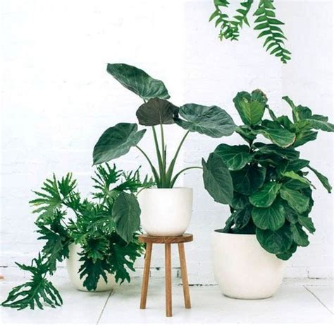 plants at home 38 the best design of ornamental plants at home decoredo