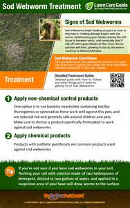 sod webworm treatment control how to get rid of sod webworms