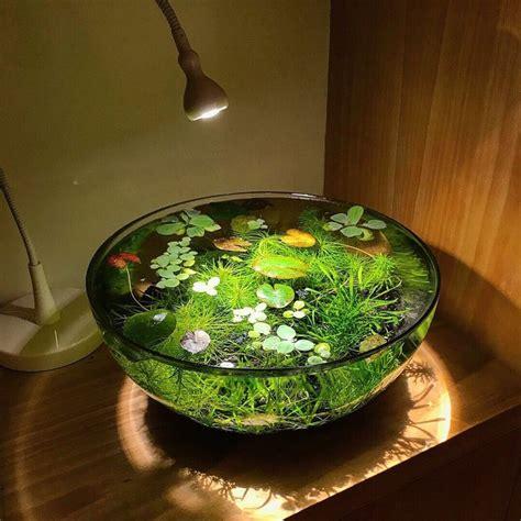 solarpunk aesthetic     indoor pond