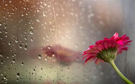 rain wallpaper pinterest love rain hd desktop background wallpapers hd free 503897