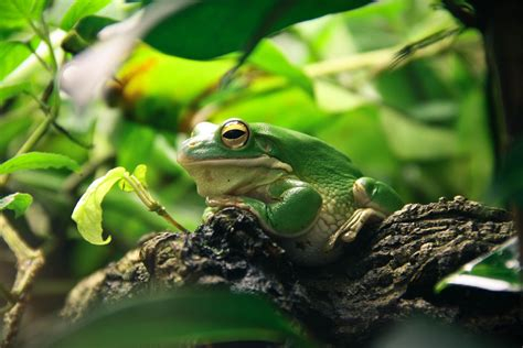 about pet what you need to about pet frogs