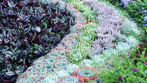 drought resistant landscaping with succulents