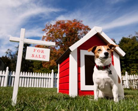 dog houses on sale dog with dog house for sale photo getty images