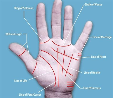 lines in palmistry reading major palm reading made easy for the spiritual ones out there