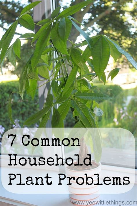 common houseplant problems 7 common household plant problems yee wittle things
