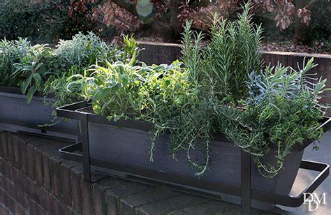 piante da ombra in vaso piante ricadenti ombra fiori da balcone pendenti 3