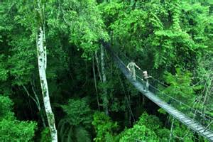 Rainforest Canopy Images by Rainforest Reserva Amazonica Canopy Walk