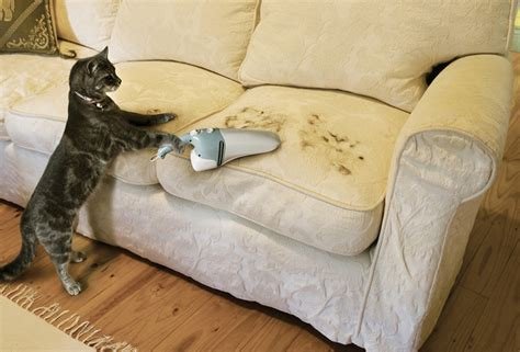 vacuum couch wallpaper cat sofa fun humor vacuum cleaner vacuum